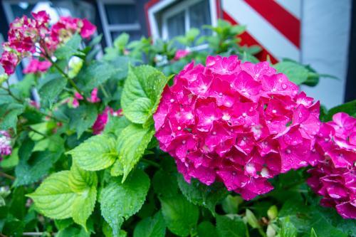 Die Gastgeberin liebt Blumen